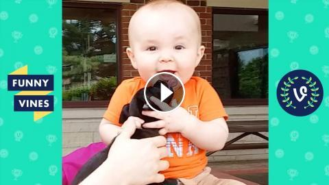 Try Not To Laugh Kids Babies Dogs Funny Videos