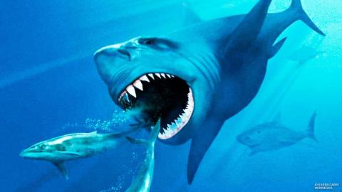 Could Megalodon Sharks Still Live In the Ocean?